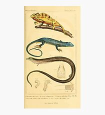 The Animal Kingdom by Georges Cuvier, PA Latreille, and Henry McMurtrie 1834  027 - Reptilia Reptiles Photographic Print