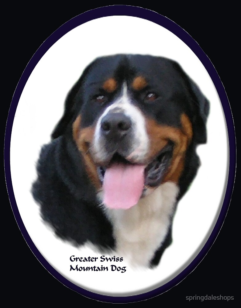 Greater Swiss Mountain Dog Art Gifts by springdaleshops