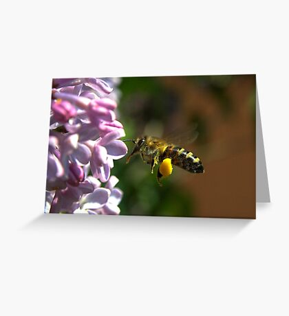 Bee in work (2) Greeting Card