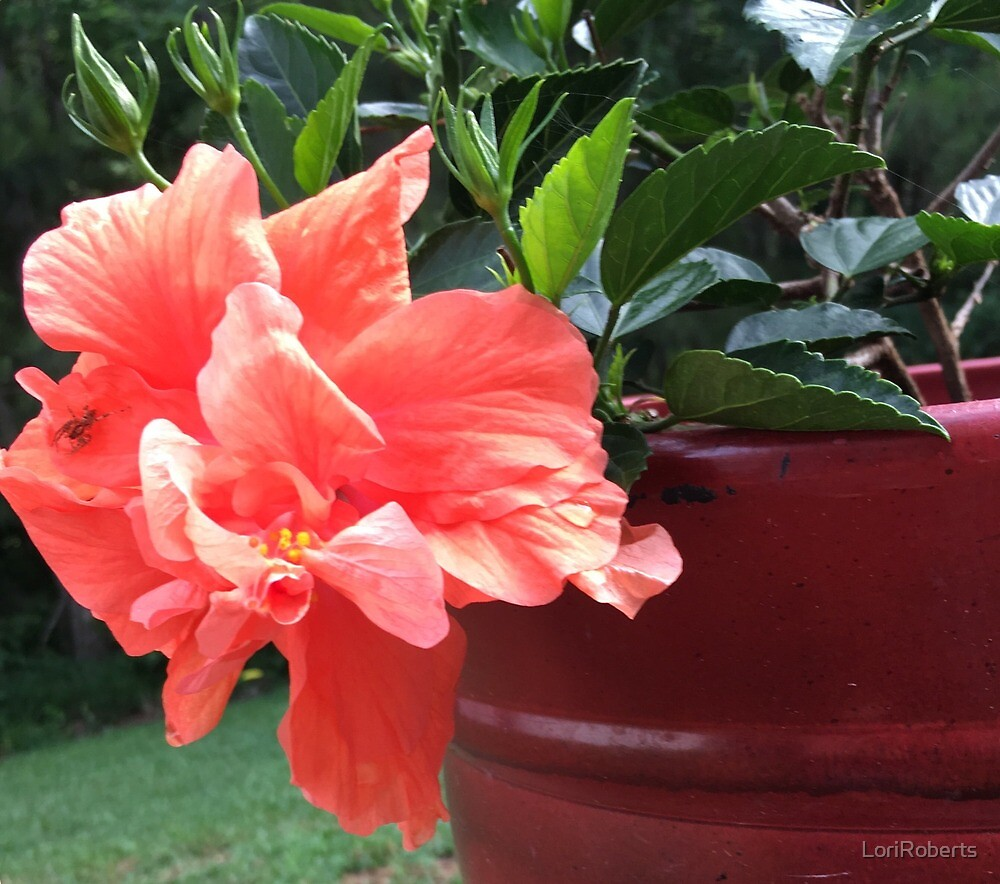 Hibiscus Hype by LoriRoberts