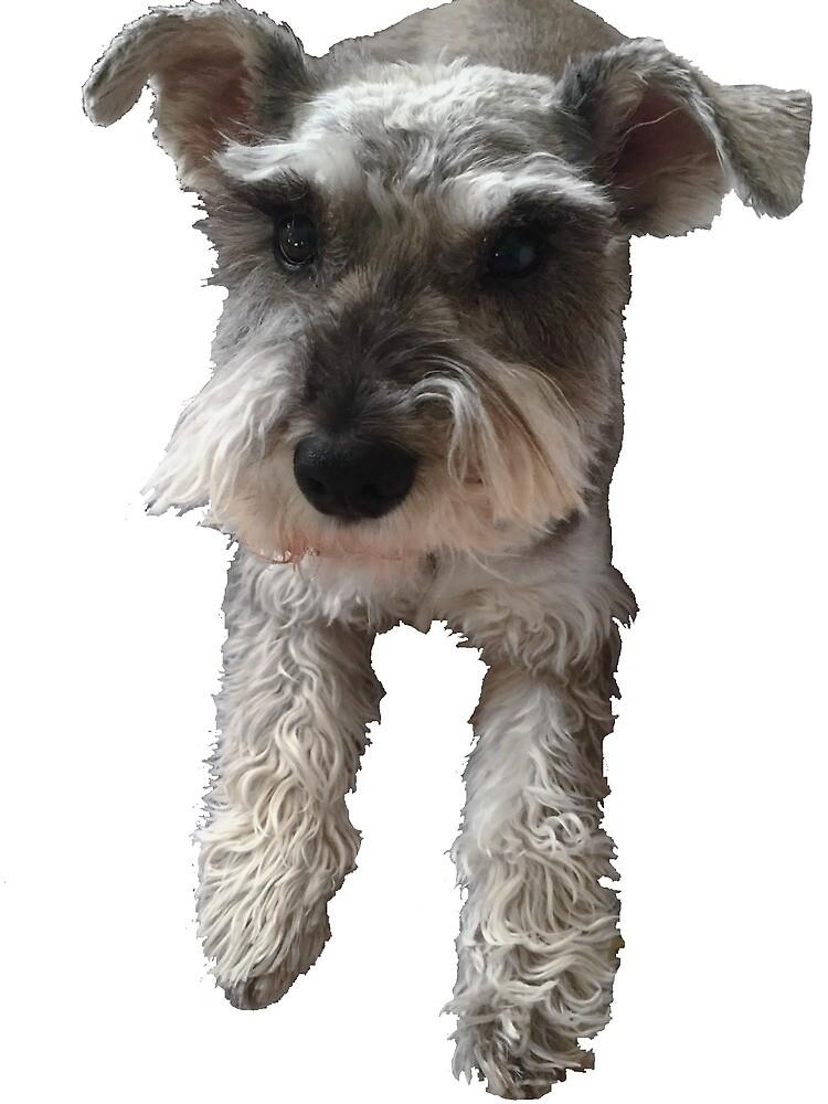 Katherine's Dog by demaxicon