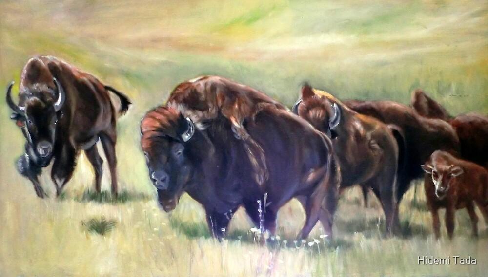 buffalo by Hidemi Tada