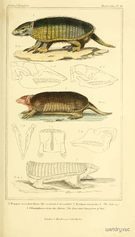 The Animal Kingdom by Georges Cuvier, PA Latreille, and Henry McMurtrie 1834 614 - Mammalia Mammals by wetdryvac