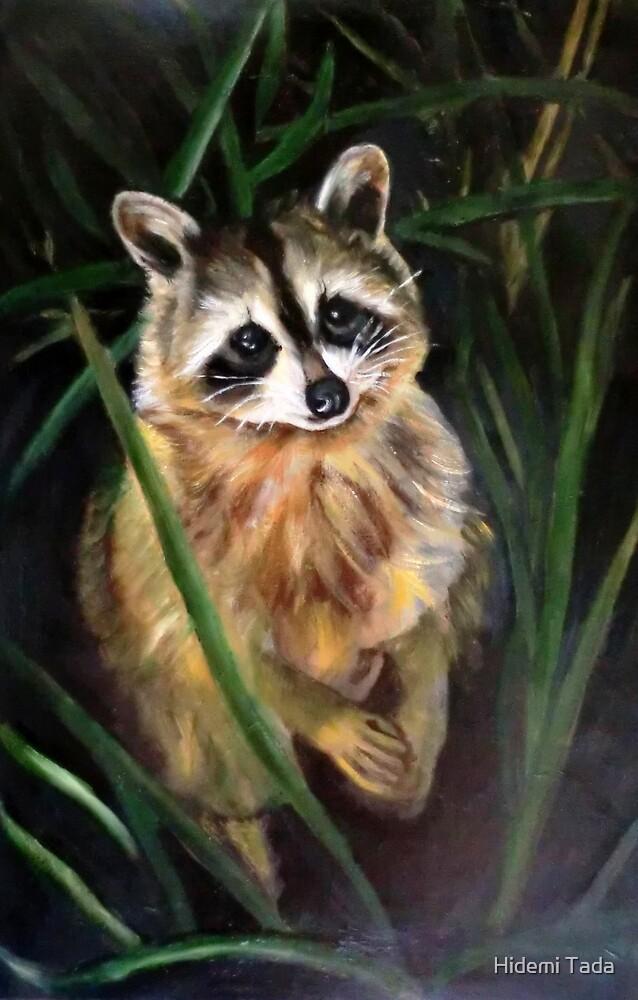 raccoon by Hidemi Tada