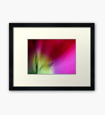 Tulip Sunrise Framed Print