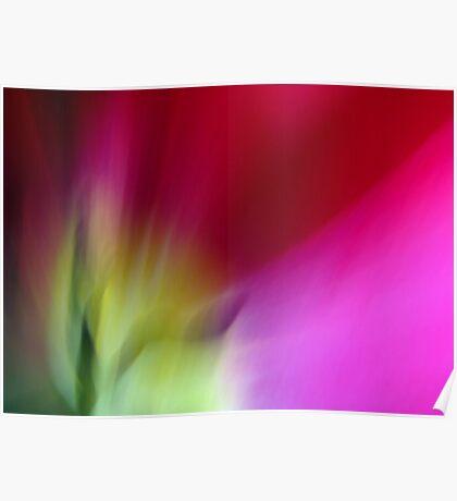Tulip Sunrise Poster