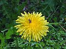 Flower, or just another weed? by Richard Williams