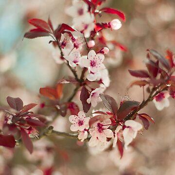 Plum in bloom by NoeliaUroz