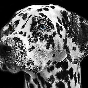 101 Dalmatian black and white by SteviePix