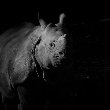 Rhino black and white by SteviePix