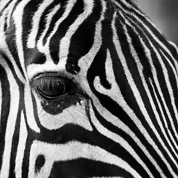 Zebra close up by SteviePix