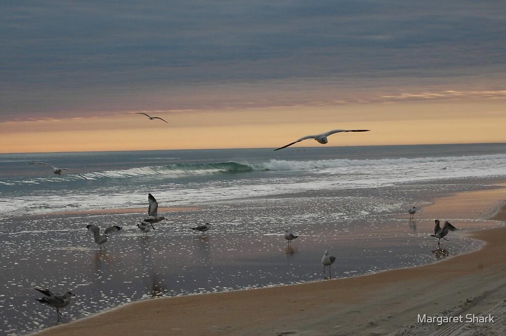 Morning Song by Margaret  Shark