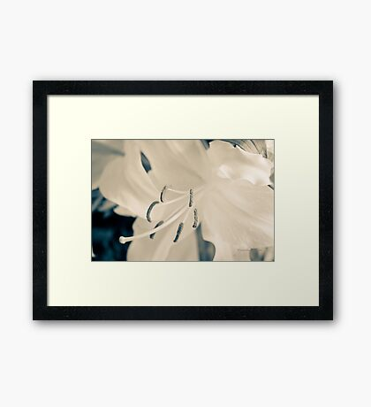Earth Day (Lily) Framed Print