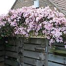 My Other Clematis by dougie1