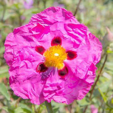 Creased Flora by Femaleform