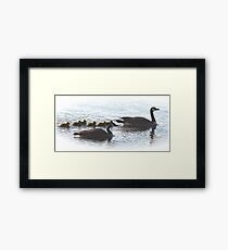 The Mr Canada Goose Family Framed Print