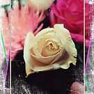 White and Pink Roses by Vickie Emms