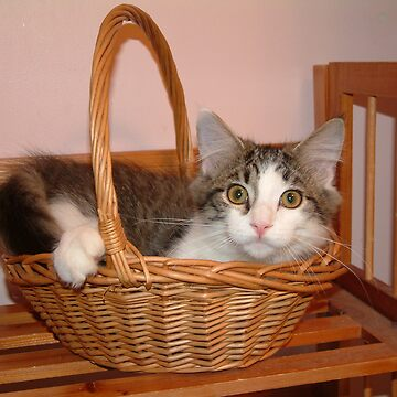 Basket Case Kitty by foxyphotography