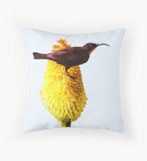 Amethyst Sunbird on Flowering Red Hot Poker Throw Pillow