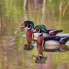 Wood Ducks B.F.F. - Ottawa, Canada by Jim Cumming