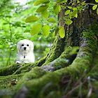Spring Green by Morag Bates