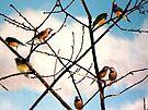 Beautiful Bouquet of Birds by Veronica Schultz