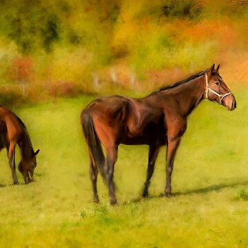 Horses in the Pasture by kenmo