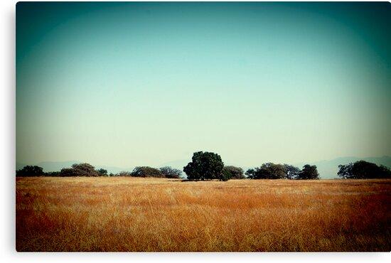 Furrows of the Field by Corin Jones