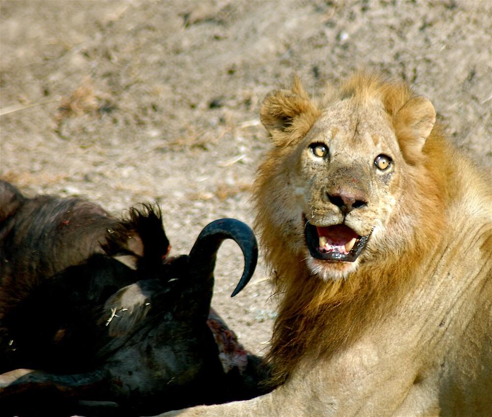 Full lion = Happy lion by DUNCAN DAVIE