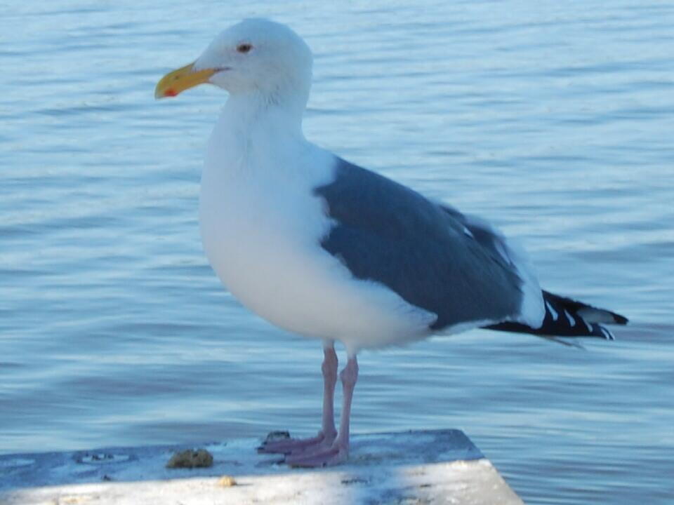 No gull, that's my fish over there! by sedmondson