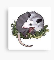 Screaming possum Canvas Print