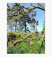 Gnarled Trees and Stoney Hills Photographic Print