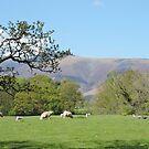 Classic Lake District by CreativeEm