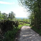 Country Lane Lake District 070518 by CreativeEm