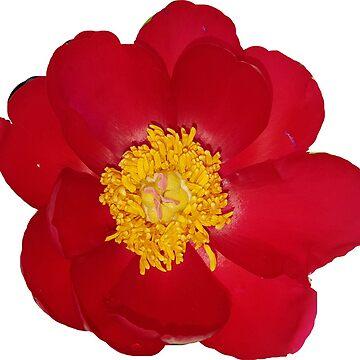 Flower by ledbytheunknown