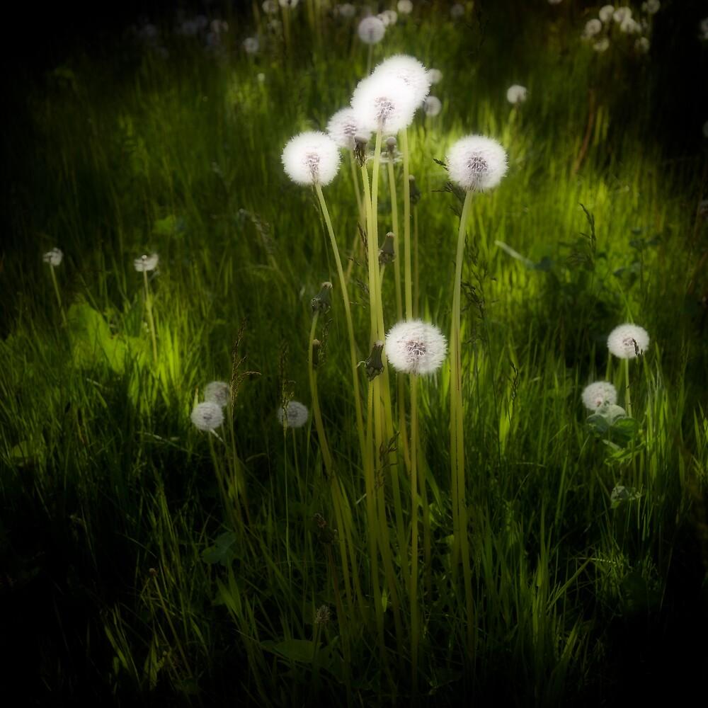 field of dreams by Bill vander Sluys