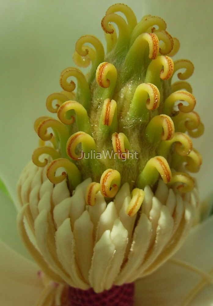 Magnolia Heart by JuliaWright