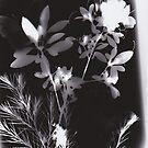 Floral Shadows by lritlinger