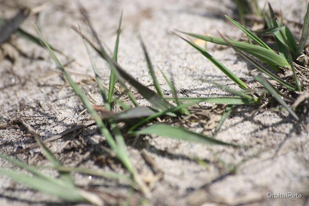 Dune grass by OrbitalPete
