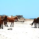 Wild Horse Mating by lritlinger