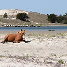Wild Horse Chilling by lritlinger