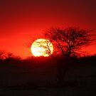 Etosha sunset by ChrisCoombes