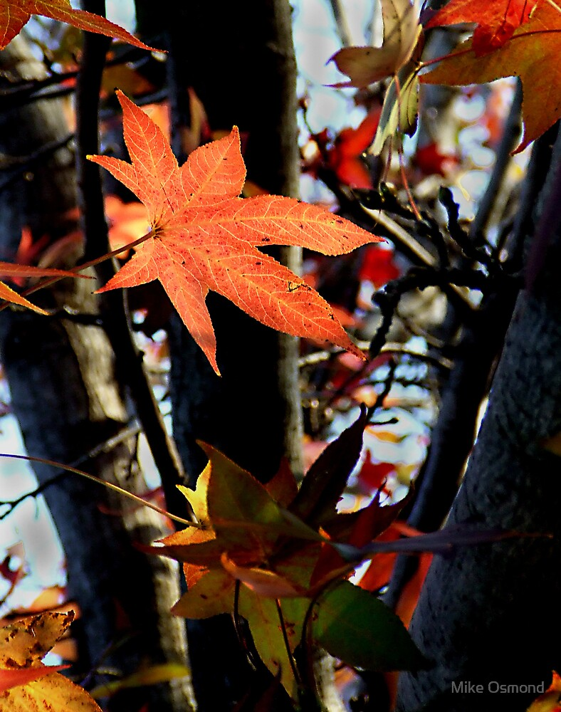 Autumn colours 4 by MikeO