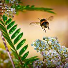 Busy Bumblebee !! by jdmphotography