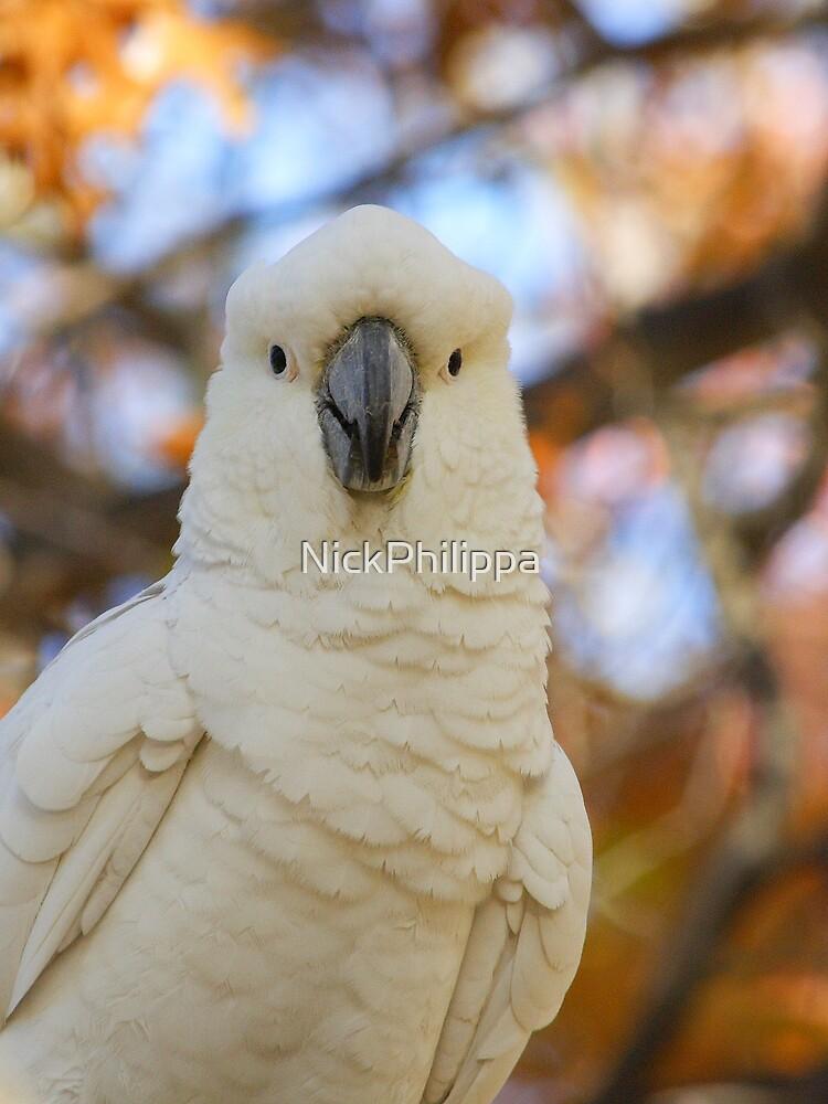 Cockatoo by NickPhilippa