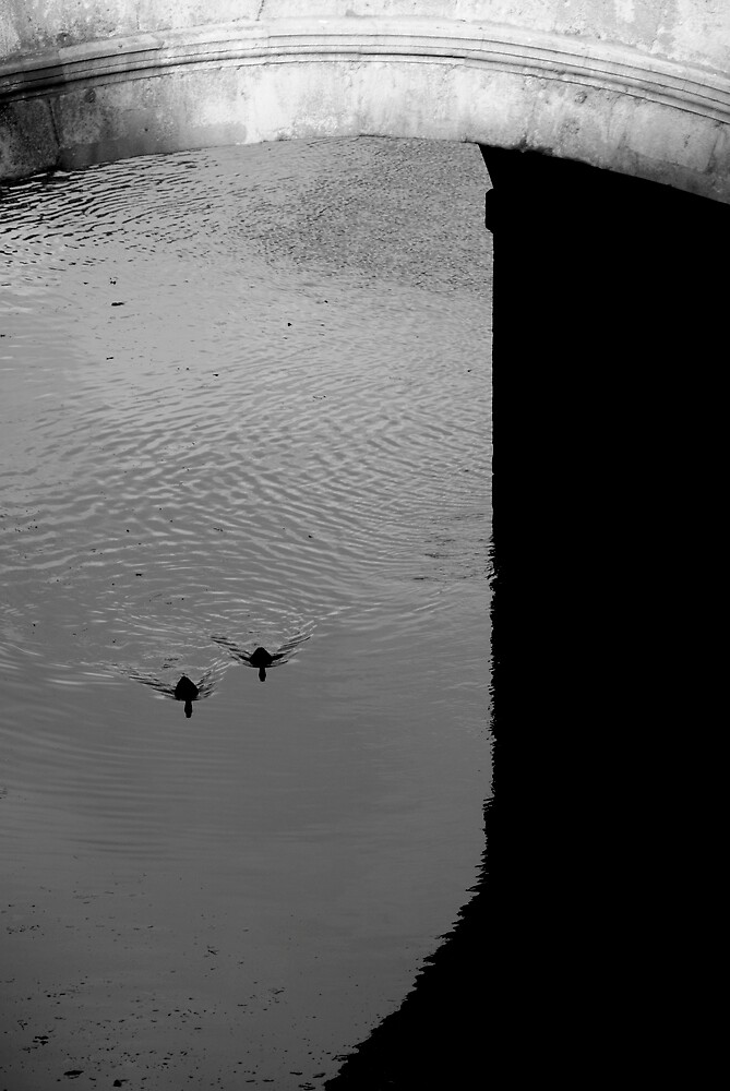 Ducks ! by Michelle Secombe