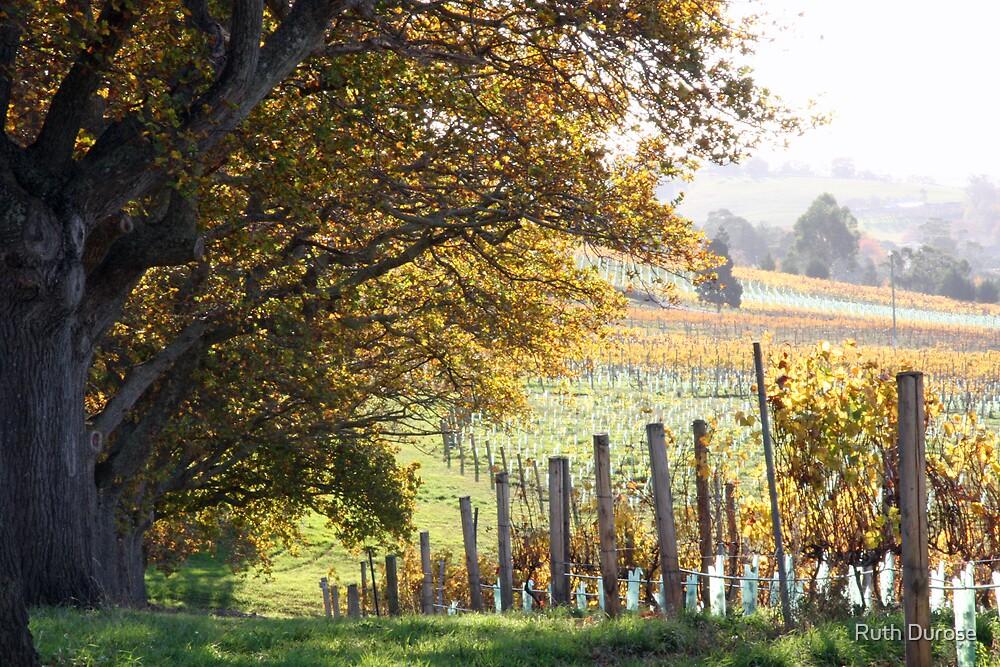 Autumn, Tamar Valley Wine Route - Tasmania by Ruth Durose
