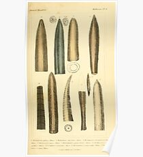 The Animal Kingdom by Georges Cuvier, PA Latreille, and Henry McMurtrie 1834  215 - Mollusca Mollusks Poster
