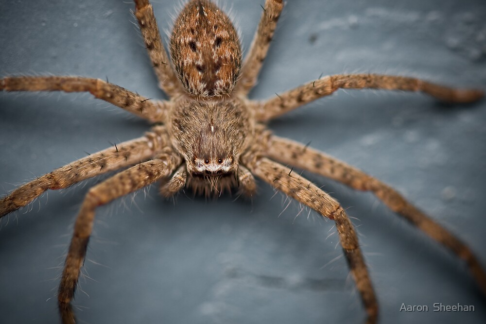 Creepy Crawler by Aaron  Sheehan
