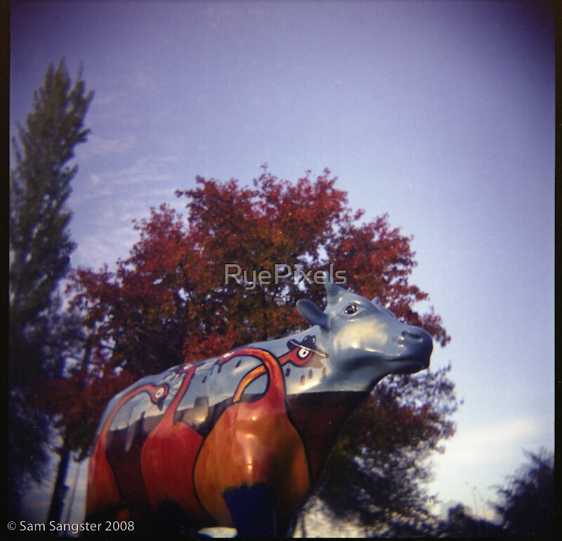 Painted cow - Shepparton by RyePixels